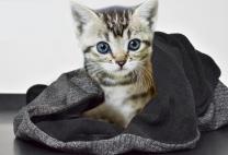 Smart Cat Wrap